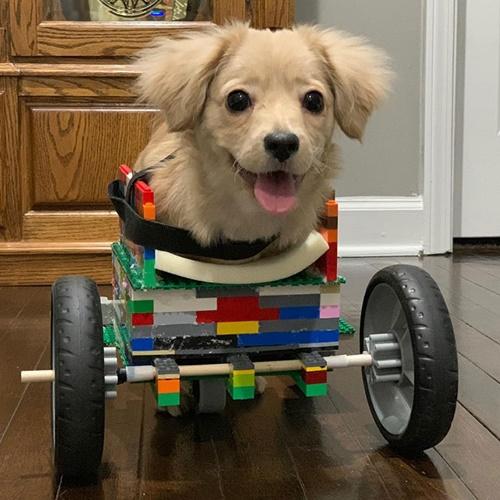 Dogilike.com :: เจ๋ง! 12 ขวบ ใช้ตัวต่อเลโก้ทำวีลแชร์ให้ตูบถูกทิ้ง ปรับได้ตามรูปร่าง