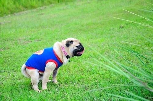 Dogilike.com :: หมดกังวล! ปัญหาสุนัขระบบขับถ่ายไม่ดีกับวิธีดูแลที่เจ้าของต้องรู้