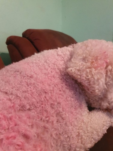 Dogilike.com :: ตูบกลายเป็น Peppa Pig หลังคุณแม่ลูก 3 พลาดทำสีหกใส่!