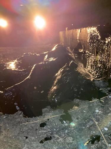 Dogilike.com :: สงสาร! ตูบติดน้ำมันดินรอดหวิด อาสาฯช่วยล้างตัวนาน 9 ชม.