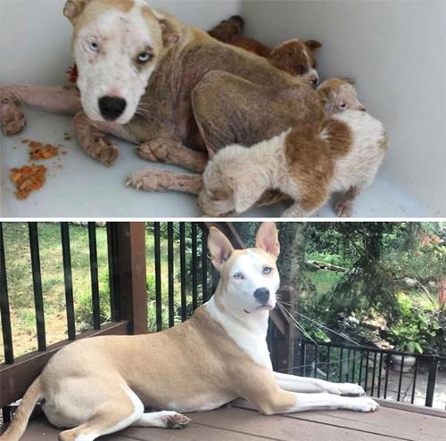 Dogilike.com :: เผยภาพเหล่าน้องหมากับความเปลี่ยนแปลงหลังถูกช่วยเหลือ!