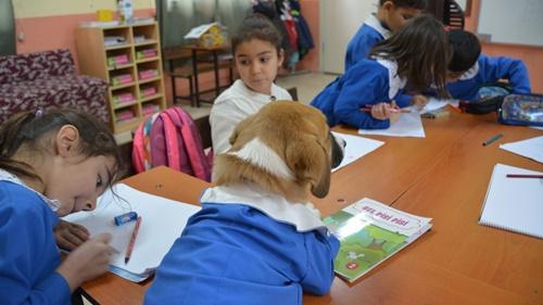 Dogilike.com :: น่าเอ็นดู! เมื่อตูบตัวน้อยกลายเป็นเด็กนักเรียนประถมที่ตุรกี