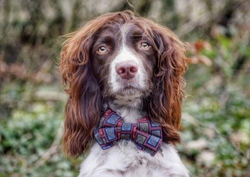Dogilike.com :: เจ้า Finley ตูบผมสวยจนยอดติดตามในอินสตาแกรมพุ่ง !