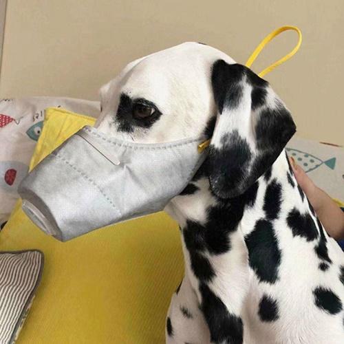 Dogilike.com :: คนจีนแห่สั่งซื้อหน้ากากป้องกันให้สุนัข หวั่นติดเชื้อโคโรน่า!