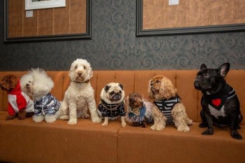 Dogilike.com :: ร้านอาหารในอังกฤษเอาใจคนโสด พาตูบเดทเจ้าของอาจได้คู่ด้วย!
