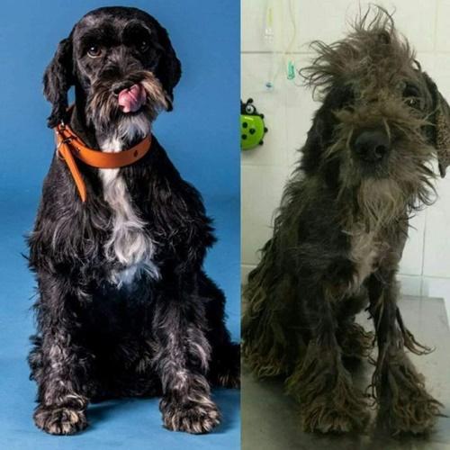 Dogilike.com :: หนุ่มตามช่วยหมาข้างถนน เอามาดูแลจนน่ารักเหมือนคนละตัว!