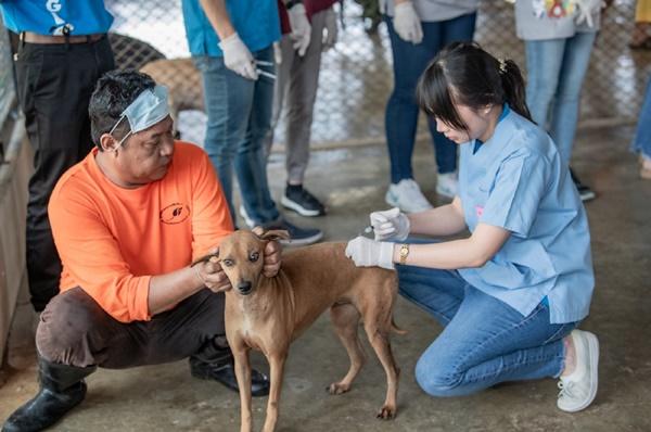 Dogilike.com :: รพส.ทองหล่อ นำทีมสัตวแพทย์ฉีดวัคซีนสุนัขใน จ.นครปฐม !