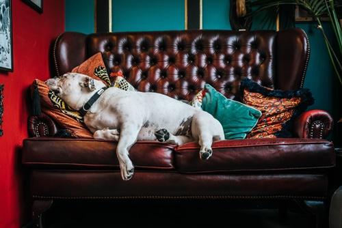 Dogilike.com :: 4 ทริคง่ายๆ อยู่บ้านกับน้องหมาแมวยังไงให้ค่าไฟไม่พุ่ง!