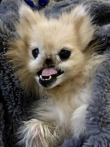 Dogilike.com :: เรื่องราว เจ้า Poa เจ้าตูบนักสู้ที่สูญเสียจมูกเพราะโรคมะเร็ง !