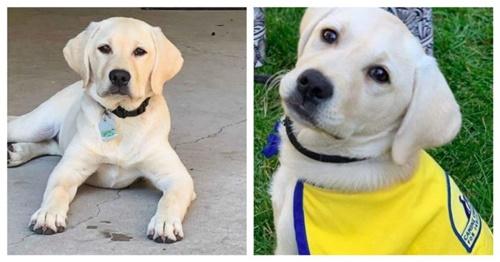 Dogilike.com :: เห็นแล้วยิ้ม! สุนัขบำบัดช่วยลดเครียดให้คุณหมอสู้วิกฤติโควิด-19