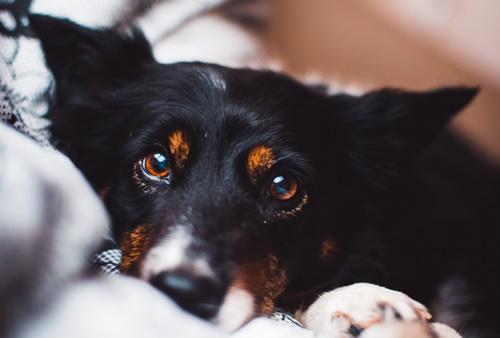 Dogilike.com :: 5 ทริค กักตัวอยู่บ้านก็กรูมมิ่งให้น้องหมาแบบมืออาชีพได้ !