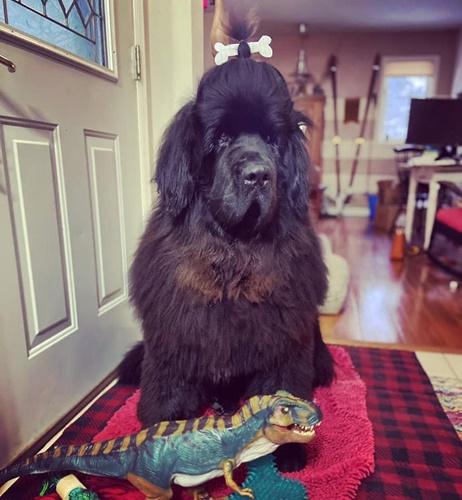 Dogilike.com :: แจกความสดใส! เมื่อคู่รักกักตัวอยู่บ้านกับน้องหมา ผลเลยออกมาเป็นแบบนี้