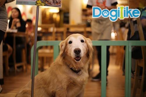 Dogilike.com :: จัดอันดับ 5 ประเทศที่เป็นมิตรกับสัตว์เลี้ยงมากที่สุดในโลก !