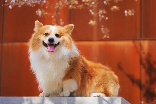 Dogilike.com :: จัดอันดับ 5 พันธุ์น้องหมาตลกแถมน่ารัก ที่คนเสพกันบ่อยช่วงนี้!