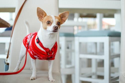 Dogilike.com :: ไขข้อสงสัย! 5 เรื่องเจ้าของต้องรู้เมื่อน้องหมา เป็นสัด