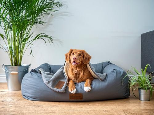 Dogilike.com :: How to ทำความสะอาดเบาะนอนน้องหมาง่ายๆ แบบมืออาชีพ!