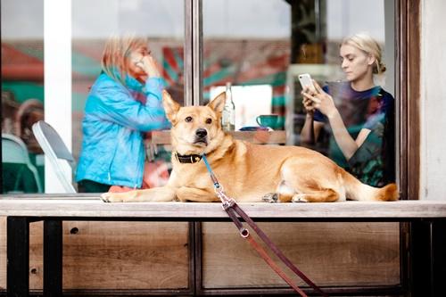 Dogilike.com :: 4 ทริค ชีวิตวิถีใหม่ (New Normal) ที่คนรักหมาหมาแมวต้องรู้!