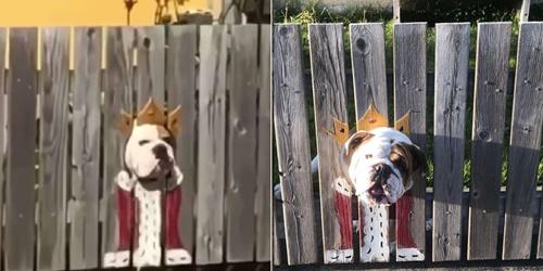 Dogilike.com :: 2 บูลด็อกชอบดูผู้คนผ่านประตูรั้ว เจ้าของปิ๊งไอเดียทำแบบนี้!