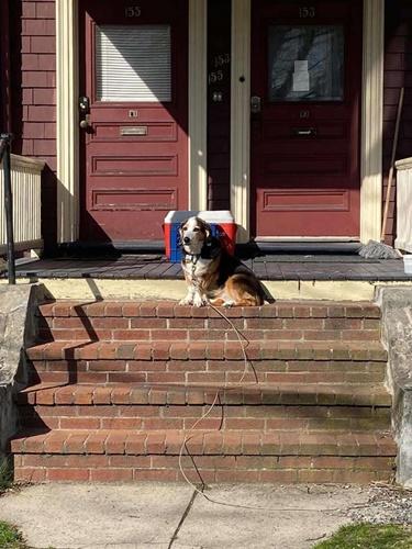 Dogilike.com :: ปิ๊งไอเดีย! เจ้าของตั้งเจลล้างมือไว้หน้าบ้าน ให้ใช้ก่อนเล่นกับตูบ