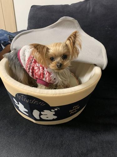 Dogilike.com :: ต้องมีแล้ว! เจ้าของฮิตซื้อเบาะนอนบะหมีกึ่งสำเร็จรูปให้เจ้าตูบ