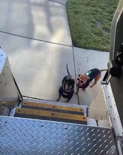 Dogilike.com :: หนุ่ม Fedex พาตูบไปช่วยส่งของหลังที่รับฝากเลี้ยงปิดช่วงโควิด-19!