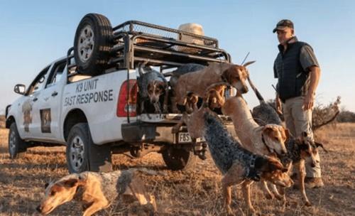 Dogilike.com :: ฮีโรสี่ขา! แก๊งน้องหมาถูกฝึกให้ปกป้องผืนป่าแอฟริกาใต้