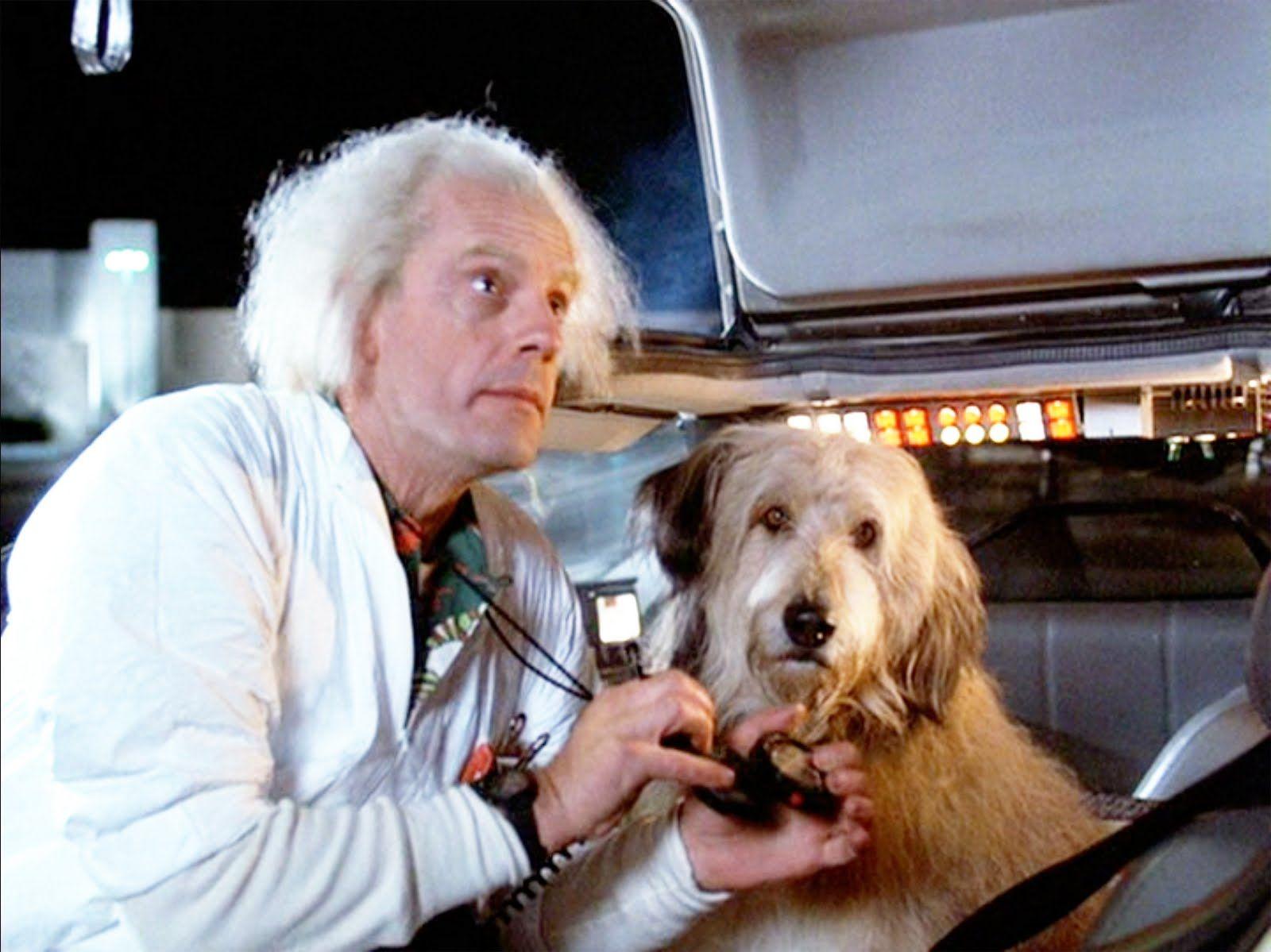 Dogilike.com :: จัดอันดับ 5 ภาพยนตร์ใน Netflix ที่ชวนน้องหมาดูด้วยกันได้!