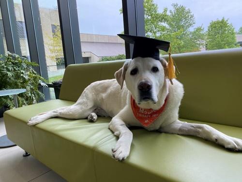 Dogilike.com :: เจ้า Moose สุนัขบำบัดได้รับปริญญาเอกกิตติมศักดิ์จาก ม.ดังในอเมริกา