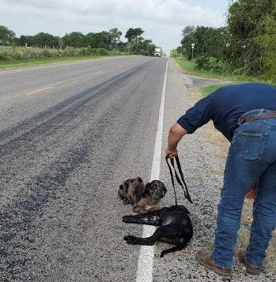 Dogilike.com :: ไม่ยอมห่าง! เจ้าตูบสุดเศร้านั่งเฝ้าพี่สาวถูกรถชนตายกลางถนน