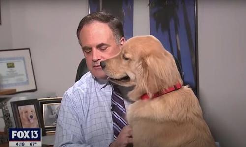 Dogilike.com :: 6ล้านวิว! น้องหมาป่วนนักข่าวขณะรายงานสภาพอากาศอยู่ที่บ้าน (คลิป)