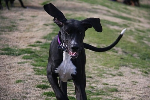 Dogilike.com :: จัดอันดับ 5 สายพันธุ์น้องหมาขนสีดำ น่ารักละลายใจคนทั่วโลก!
