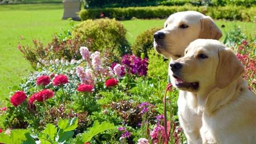 Dogilike.com :: How to จัดสวนสวยอย่างไรให้ปลอดภัยกับน้องหมา