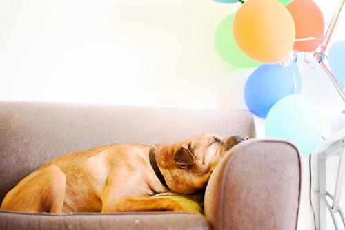 Dogilike.com :: ชวนหาคำตอบ น้องหมานอนหลับทั้งวันผิดปกติไหมนะ?