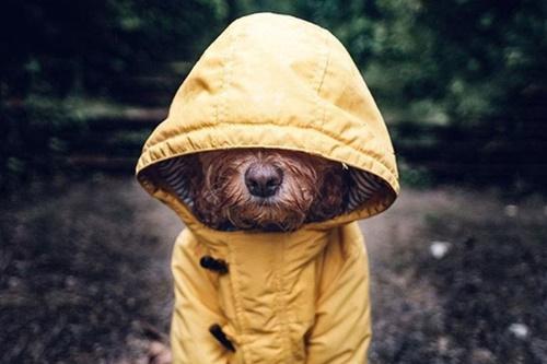 Dogilike.com :: รู้จัก! เจ้า Marley ตูบที่มีไลฟ์สไตล์สุดชิคเป็นขวัญใจคนทั่วโลก