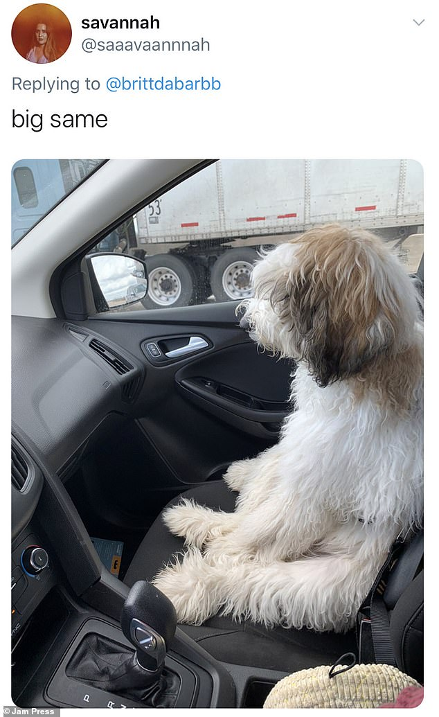 Dogilike.com :: เจ้าของพร้อมใจโชว์ภาพน่ารัก เมื่อเจ้าตูบนั่งท่าเดียวกับคน!