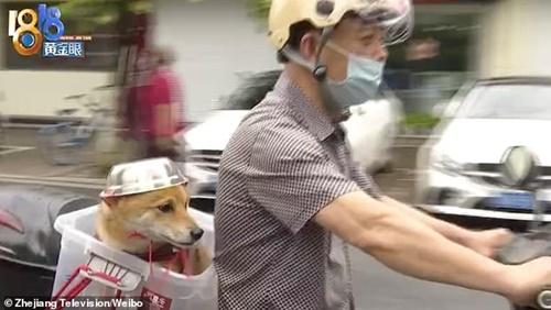 Dogilike.com :: จีนสั่งให้ผู้ขับขี่ทุกคนสวมหมวกกันน็อค เจ้าของตูบเลยทำแบบนี้!