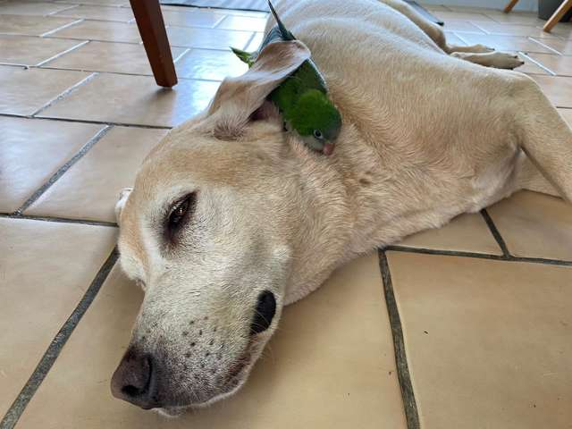 Dogilike.com :: น่ารัก! เจ้าตูบช่วยชีวิตลูกนกเอาไว้ ก่อนขอเป็นพี่เลี้ยงถาวร