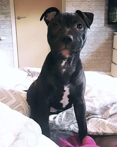 Dogilike.com :: น่ารัก! ตูบสุดฉลาดไปที่ประตูรั้วทุกวันเพื่อสุนัขข้างบ้านนวดให้ (มีคลิป)