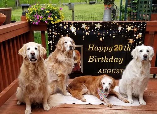 Dogilike.com :: เจ้า August โกลเด้นฯ ตัวแรกที่อายุยืนถึง 20 ปี คนแห่อวยพรเพียบ!