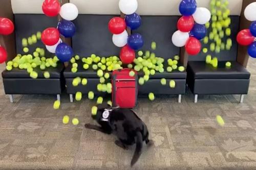 Dogilike.com :: ชวนดูคลิปน่ารัก เมื่อสุนัขดมกลิ่นปลดเกษียณถูกเซอร์ไพรส์แบบนี้!