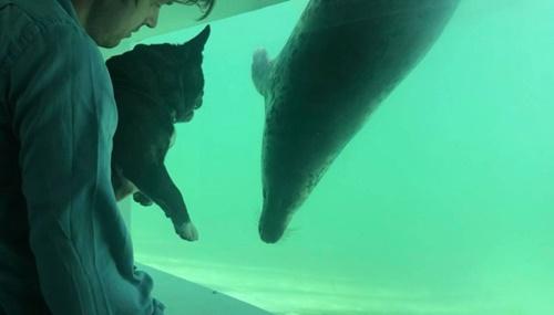Dogilike.com :: แมวน้ำในศูนย์อนุรักษ์เหงาไร้ผู้คนเข้าชม แก๊งตูบเลยบุกทักทายแบบนี้!