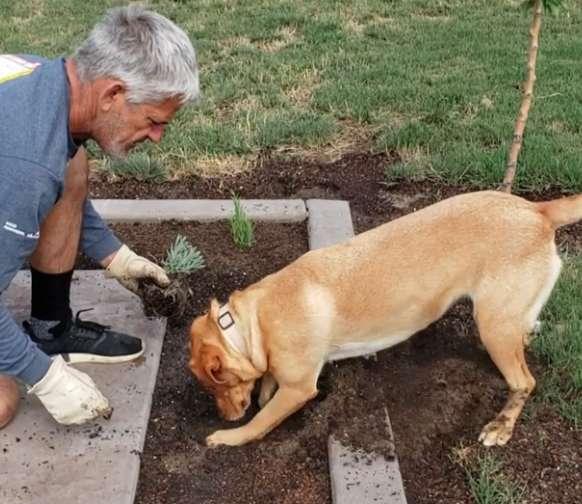 Dogilike.com :: ชาวเน็ตปลื้ม! เจ้าตูบสุดฉลาดคอยเป็นผู้ช่วยทำสวนให้คุณลุง (มีคลิป)