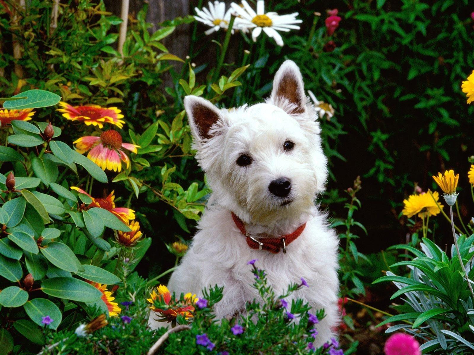 Dogilike.com :: จัดอันดับ 5 ต้นไม้สวยเป็นมิตรกับน้องหมา น่าปลูกไว้ในสวน!