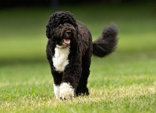 Dogilike.com :: จัดอันดับ 5 สายพันธุ์สุนัขที่เหมาะเป็นบัดดี้ว่ายน้ำของคุณ