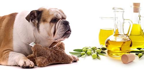 Dogilike.com :: น้ำมันมะกอก กับ 6 ประโยชน์ที่ดีต่อน้องหมา !