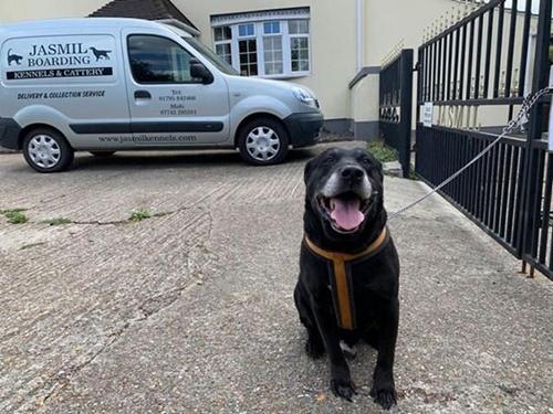 Dogilike.com :: เจ้าของทิ้งลาบราดอร์ที่เลี้ยงมา 10 ปี พร้อมจดหมายสุดสะเทือนใจ!