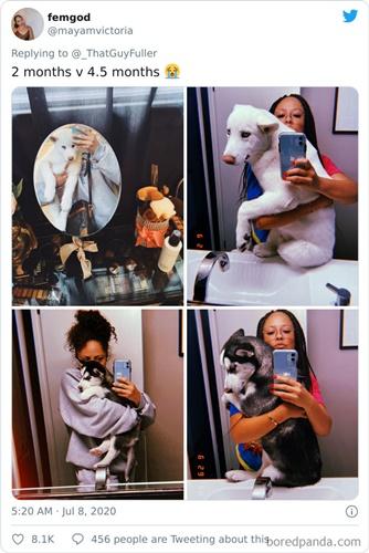 Dogilike.com :: มาแรง! เหล่าเจ้าของพากันอวดรูปเจ้าตูบ ตอนเด็ก VS ตอนโต