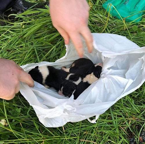 Dogilike.com :: ทิ้งได้ลงคอ! พบลูกหมาแรกเกิดถูกแขวนไว้กับรั้วลวดหนาม