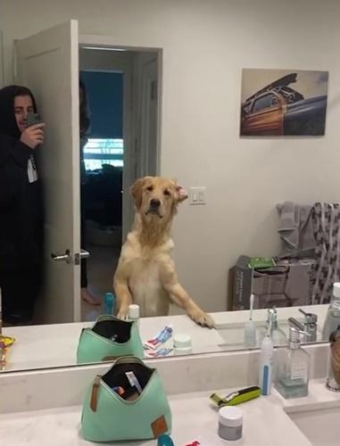Dogilike.com :: งานนี้มีงง! เมื่อเจ้าของเล่นซ่อนแอบกับน้องหมา ผลออกมาเป็นแบบนี้