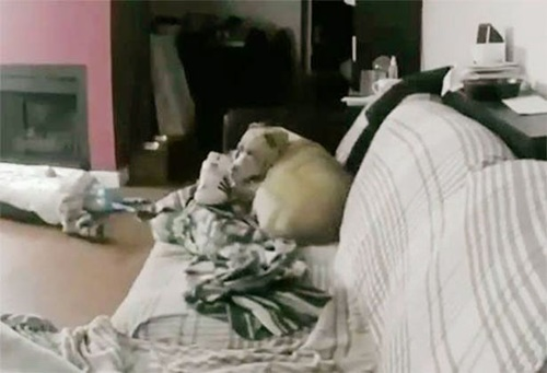 Dogilike.com :: เจ้าของสัญญาจะไม่ปล่อยตูบอยู่บ้านลำพังอีก หลังตั้งกล้องไว้แบบนี้!